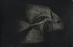 Biancuzzi - 7ème passager - tirage baryté