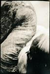 Biancuzzi - Animus - Tirage Lith
