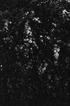 Biancuzzi_Sabrina-Femme_disparue-005