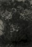 Biancuzzi - Arcane sans nom - tirage baryté et pigments