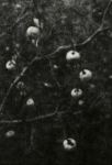 Biancuzzi - Arcane sans nom - tirage lith